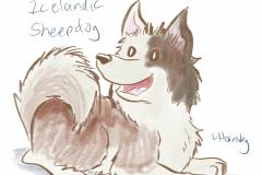 081719icelandicsheepdog