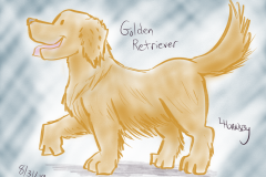 goldenretriever083119